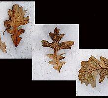 Oak Leaves on Snow by kenspics