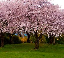 Spring in BC by Wanda Dumas