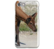 Gorgeous Young Elk, Yellowstone NP iPhone Case/Skin
