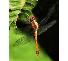 The Golden Dragon Photographic Print
