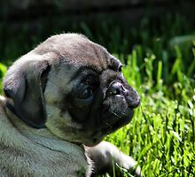 A Puppy by Teresa Zieba