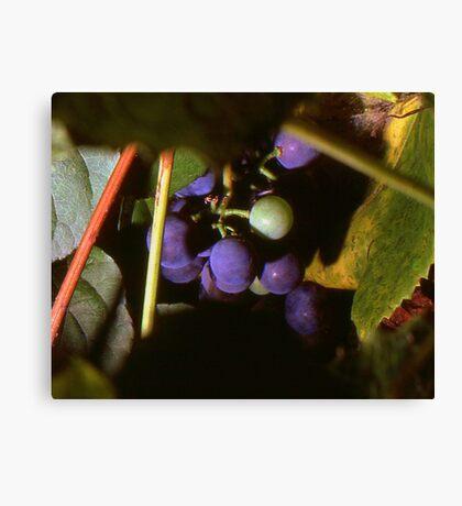 Hidden Grapes Canvas Print