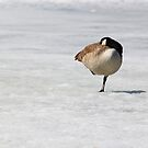 Alone on the ice by Ryan  Reid
