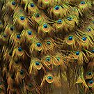 Tail Feathers by Anne McKinnell