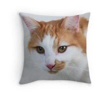 A Plea from a cat named Virtue Throw Pillow