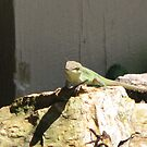 A Green Lizard is A Happy Lizard by JeffeeArt4u