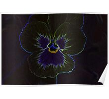 Neon Pansy Poster