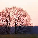the Tree Across the Meadow by Geno Rugh