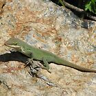 Anolis Lizard-Green Anole by JeffeeArt4u