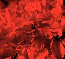 Petal Red... by byzantinehalo