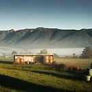 Mole Ck Misty Morning by Tim Wootton