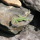 Just Stretch Out-Anole Lizard by JeffeeArt4u