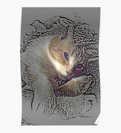 Feline Lullabye Poster