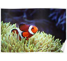 """""""Nemo, where are you?"""" Poster"""