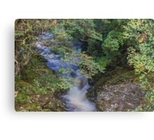 Weindorfers Forest, Cradle Mountain, Tasmania Canvas Print