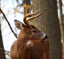 8 point profile by tony  babcock