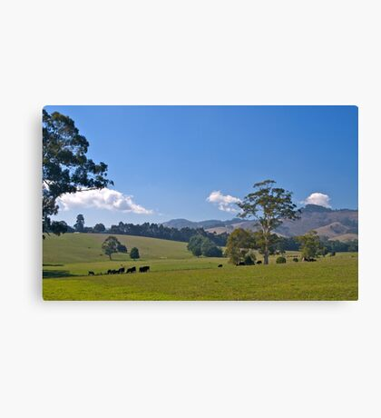 Premium cow country: Warragul, Victoria. Canvas Print