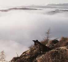 A Dog Above The Clouds by VoluntaryRanger