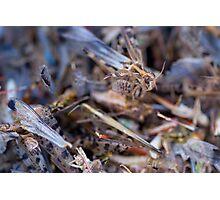 Swarm Photographic Print