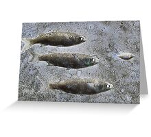 Bait Fish Greeting Card