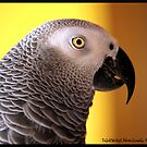 African Grey by tigerwings