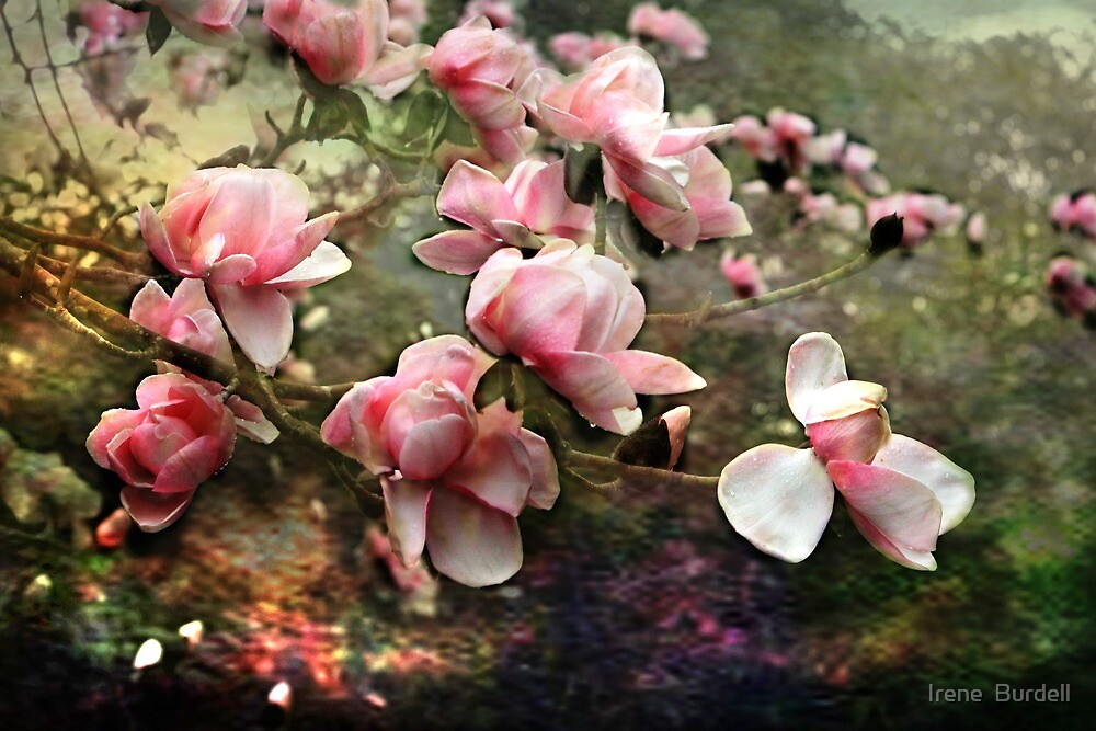Vintage Magnolias by Irene  Burdell