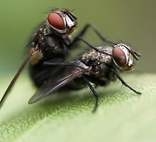 Dirty Flies! by Raychel
