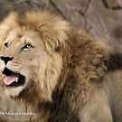 A CALL IN THE WILDERNESS... THE LION, Panthera leo by Magaret Meintjes