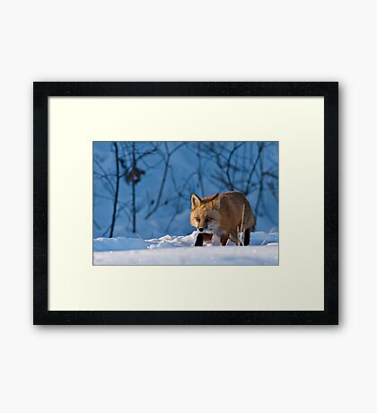 Trotting By Framed Print