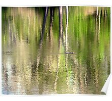 Reflections and the Alligator Poster