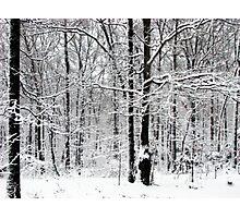 Quiet Unexpected Beauty Photographic Print