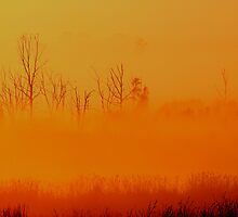 Dawn in the Okavango swamp by Rudi Venter