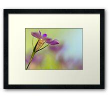 Lobelia Blossom Framed Print