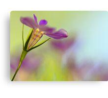 Lobelia Blossom Canvas Print
