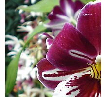Flower colored playful Photographic Print