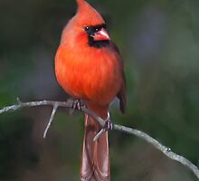 Northern Cardinal, Painted by Nancy Bray