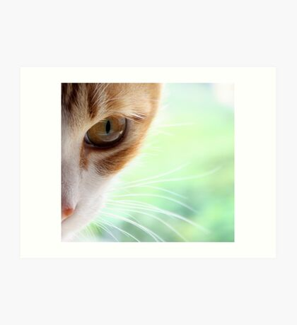 Golden Whiskers Art Print