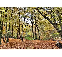 Leafy Glade Photographic Print