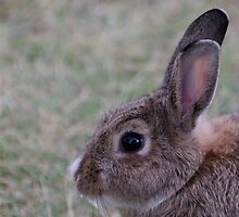 The Easter bunny ? by Brian Edworthy