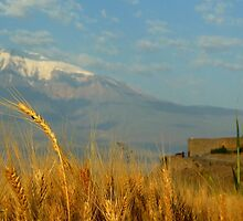 Wheat fields of Khor Virap by fortheloveofit