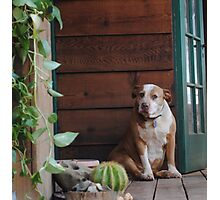 Haley On The Porch Photographic Print