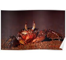 The Crab Poster