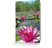 Water lilies in a summer pond Greeting Card