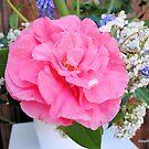 Pretty Pink by NancyC