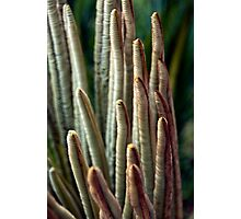 Cycad Fingers Photographic Print