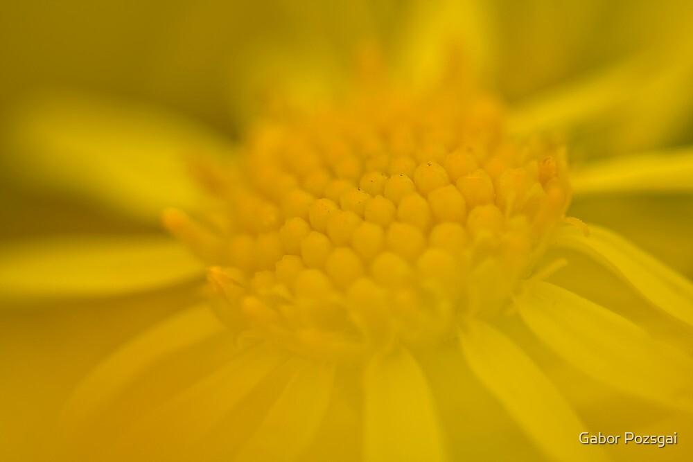 Blurred yellow flower by Gabor Pozsgai