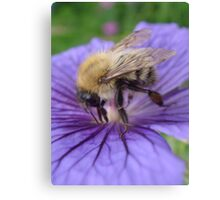 Bumble Bee Just Visiting. Canvas Print