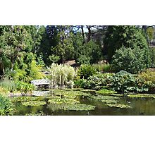 Lilly Pond Photographic Print