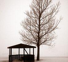 Cobb's Fog 2 by Brian Scott