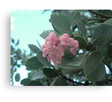 Manzanita Blossoms Canvas Print